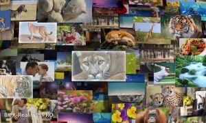 8к телевизор — что это за зверь, брать или нет в 2019 году?
